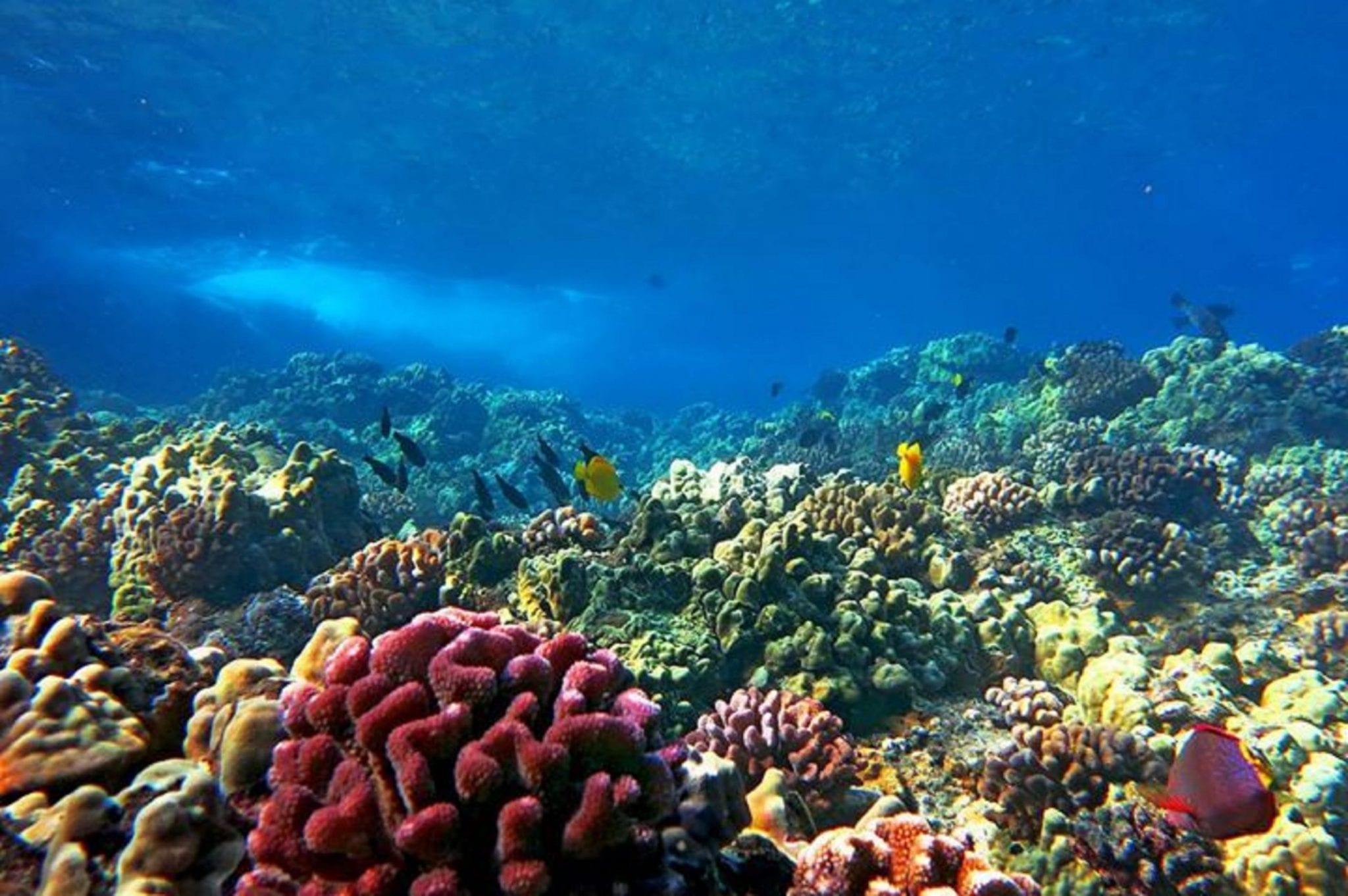 coral_gardens photo