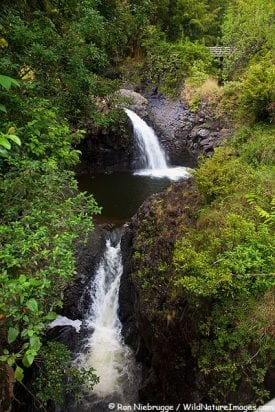 Discover Hawaii Tours, The Road to Hana Deluxe-751
