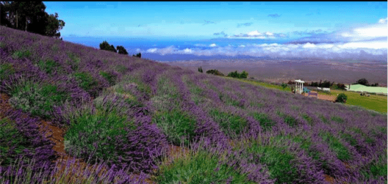 Maui upcountry farm tours 177