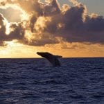 Alii Nui - Luxury Whale Watching (Sunset WW)