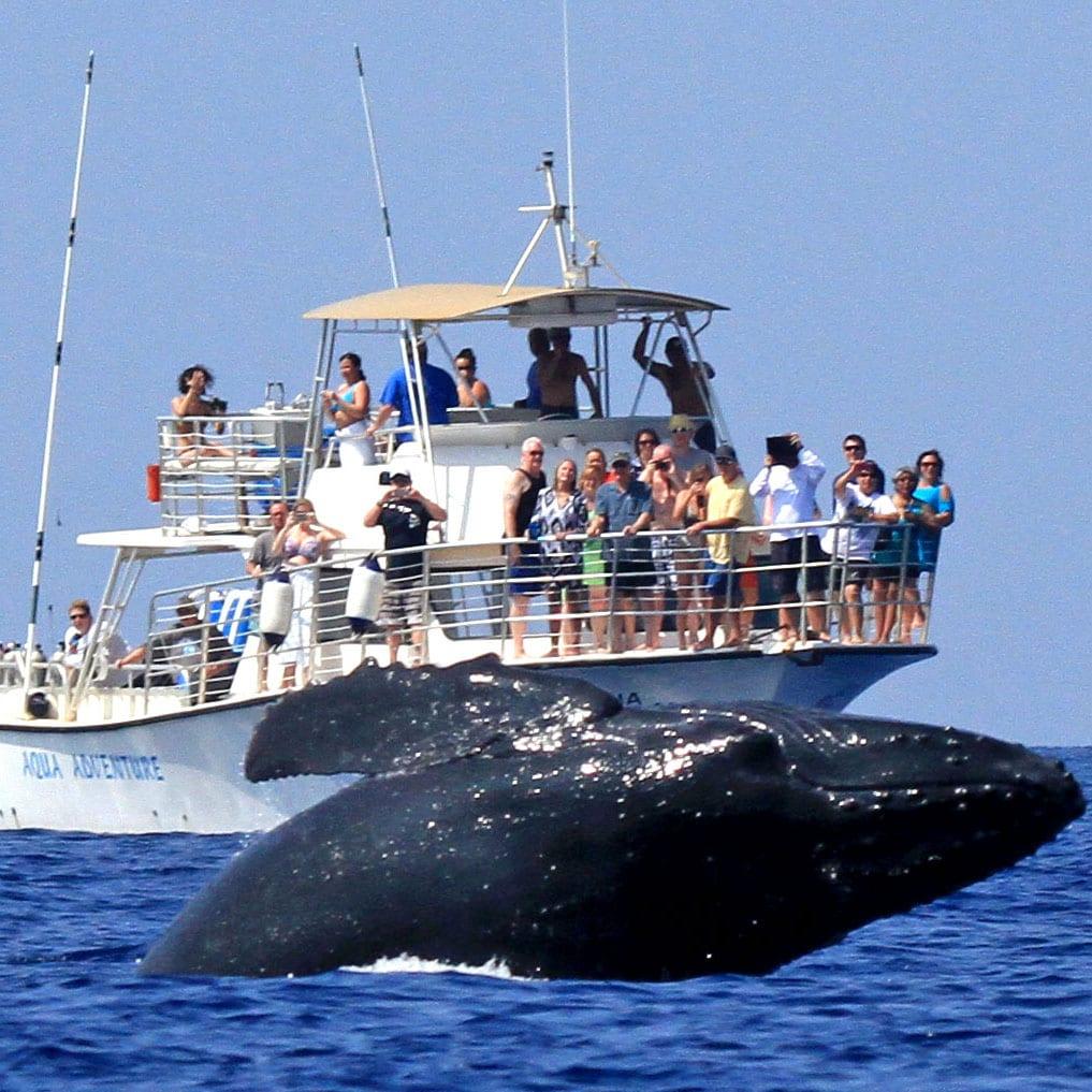 Aqua Adventures – Molokini Snuba and Snorkel
