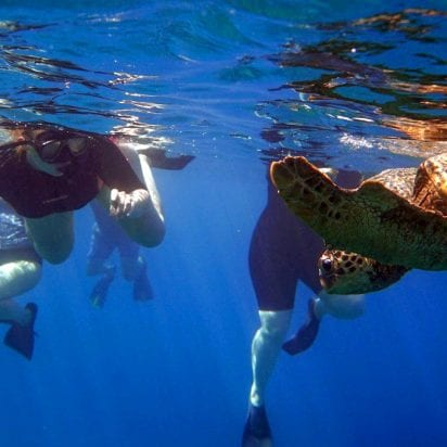 Aqua Adventures - Molokini Snuba and Snorkel (Snorkel)