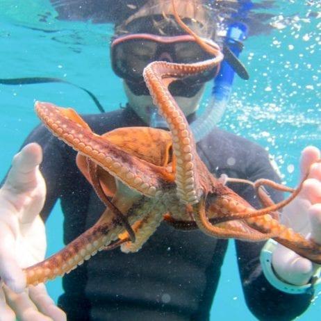 Aqua Adventures - Molokini Snuba and Snorkel (Octopus)