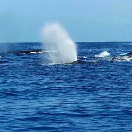 Blue Water Rafting - 4 Hour Kanaio Coast Snorkel (Whale Season)