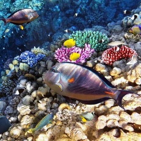 Blue Water Rafting - 4 Hour Kanaio Coast Snorkel (Reef)