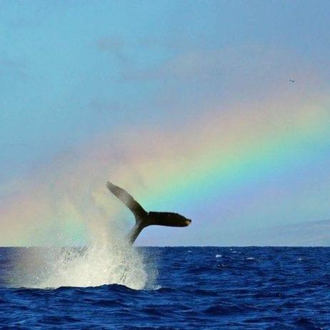 Captain Steve's Rafting - Deluxe Lanai Dolphin Snorkel (Rainbow)
