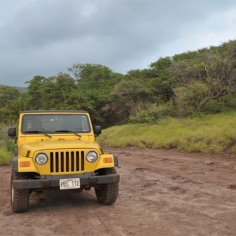 Expeditions - Lanai Jeep Excursion with Ferry (Yellow Jeep)