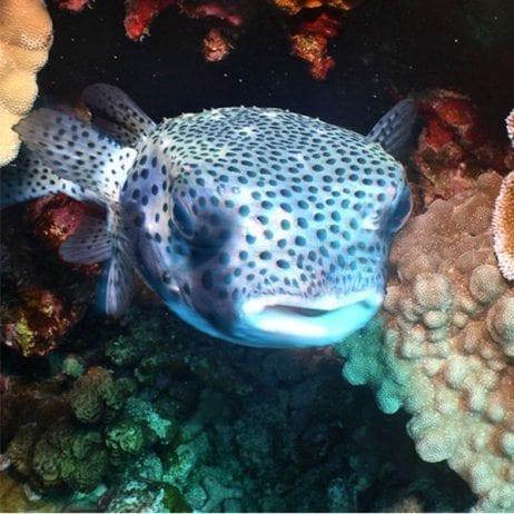 Four Winds Snorkeling - Morning Molokini Snorkel (Fish)
