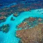 Frogman Charters - Afternoon Coral Gardens Snorkel (Coral Garden)