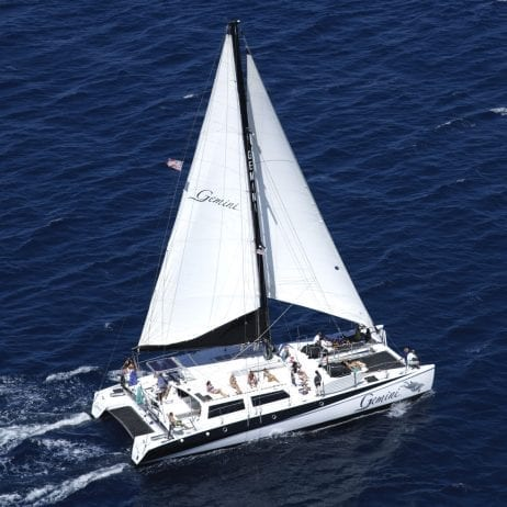 Gemini Charters - Whale Watching Sail (Sailing Catamaran)