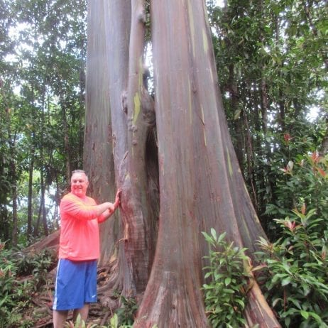 Hana Tours of Maui - Road to Hana Tour (Tree)