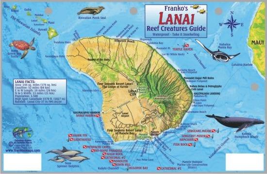 Maui Lanai reef creatures guide 546