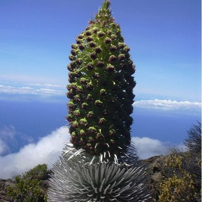 Hike Maui - 4 Mile Haleakala Crater Hike 8 Hours (Silversword)