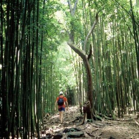 Hike Maui - Hana Waterfall Hike 11 Hours (Bamboo Path)
