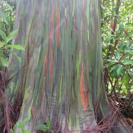 Hike Maui - Hana Waterfall Hike 11 Hours (Tree)