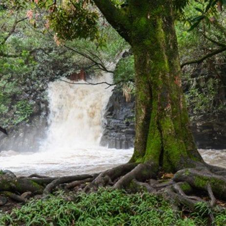 Hike Maui - Kayak and Waterfall Hike 7 Hours (Maui Falls)