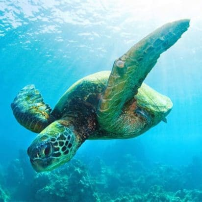 Keliis Kayaks - All Tours (Turtle)