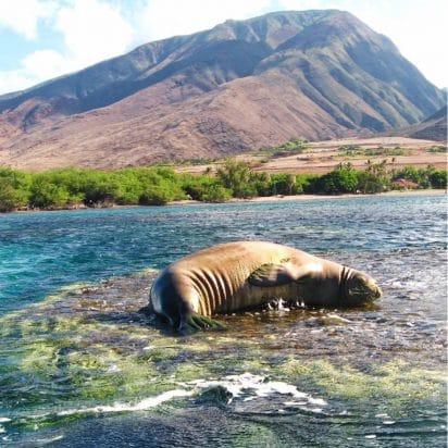 Keliis Kayaks - All Tours (Seal)