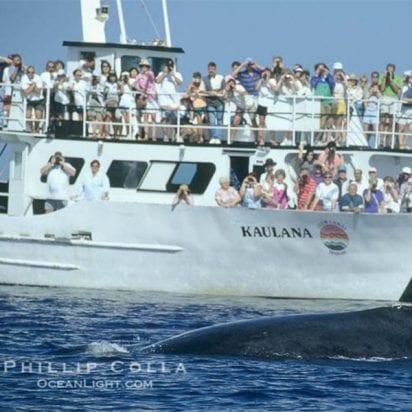 Lahaina Cruise Company - Kaulana Whale Watch (Whale Watch)