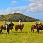 Lahaina Stables - Lunch Ride (Group Horseback Ride)