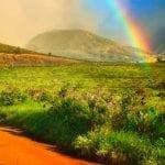 Lahaina Stables - Sunset Ride (Rainbow)