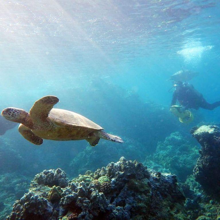 Makena Coast Charters- 2 Tank Molokini Dive