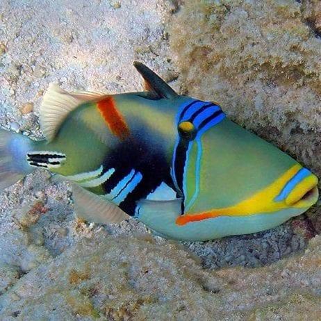 Maui Adventure Cruises - Lanai Snorkel and Landing (Humuhumu)