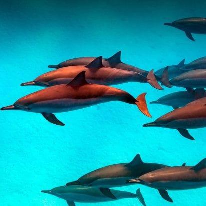 Maui Ocean Center Aquarium (Dolphin)