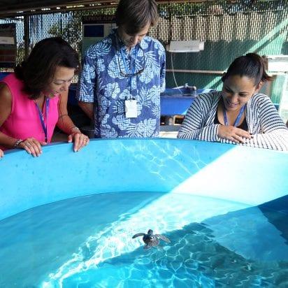 Maui Ocean Center Aquarium (Behind the Scene)