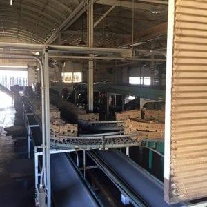 Maui Pineapple Farm Tour (Factory)
