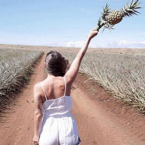 Maui Pineapple Farm Tour (Pineapple Picking)