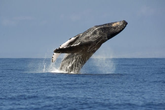 TERALANI Whale Watching - YouTube
