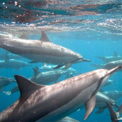 Ocean Riders - Circumnavigate Lanai (Dolphin)