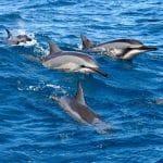 Ocean Riders - Circumnavigate Lanai (Spinner)