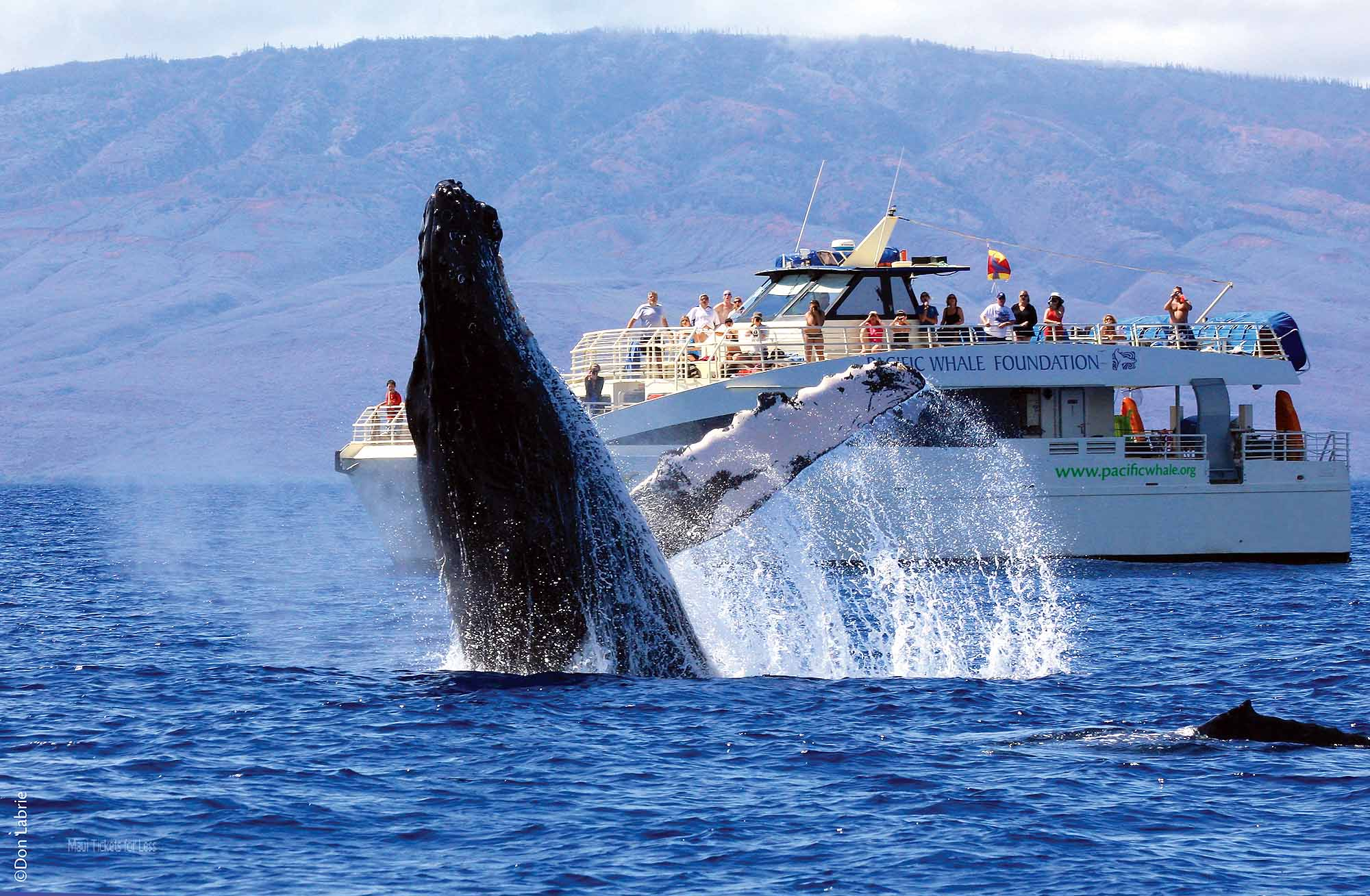 Pacific Whale Foundation – Maui Whale Watches