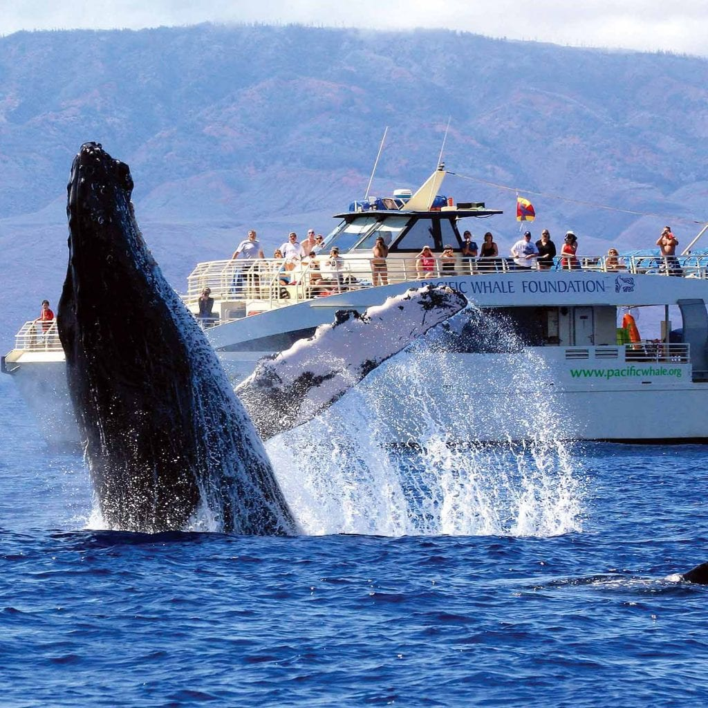 Pacific Whale Foundation - Whale Research - Maui Tickets for Less