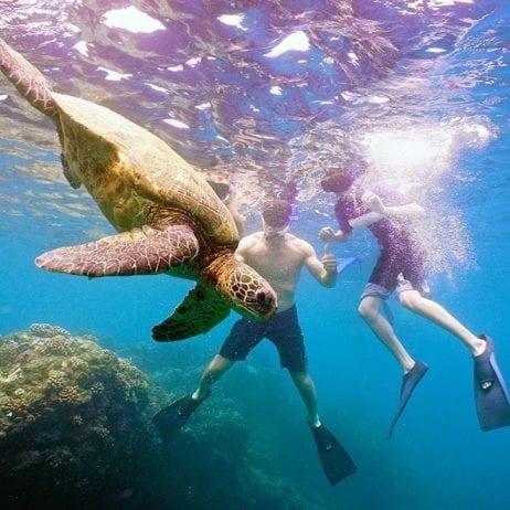Paragon Sailing - Lanai Snorkeling (Snorkelers)