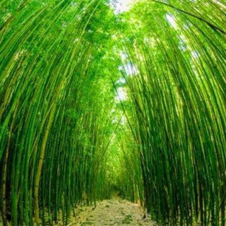 Polynesian Adventure Tours - Road to Hana Gold (Bamboo)