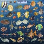 Quicksilver - Lanai Dolphin Snorkel (Fish Chart)