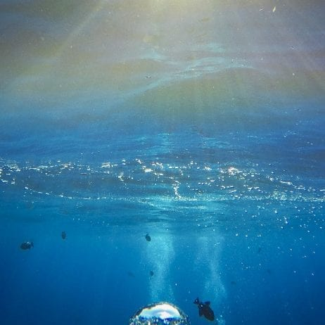 Seafire Charters - Express Molokini Snorkel (Bubble)
