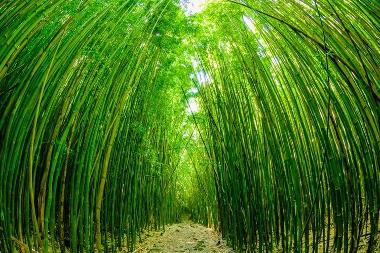 Road To Hana Discover Hawaii Tours