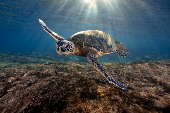 Underwater View With Sea Turtle - 3190