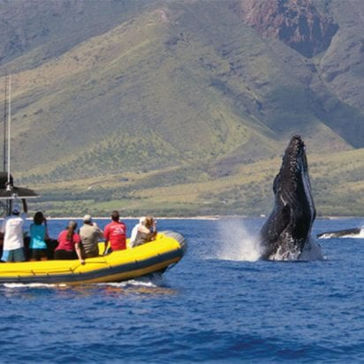 Ultimate Rafting - Maui Whale Watch (Whale Adventure)
