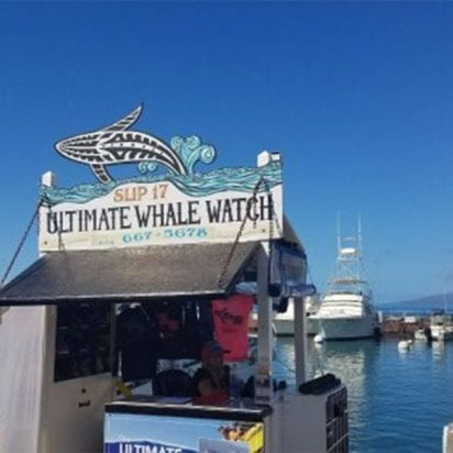 Ultimate Rafting - Maui Whale Watch (Booth)