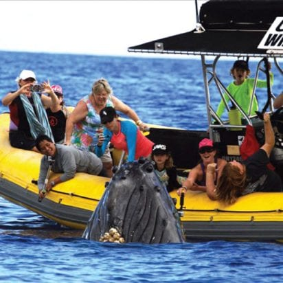Ultimate Rafting - Maui Whale Watch (Family Activity)