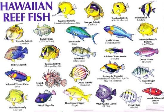 Hawaiian Reef Fish - 3192