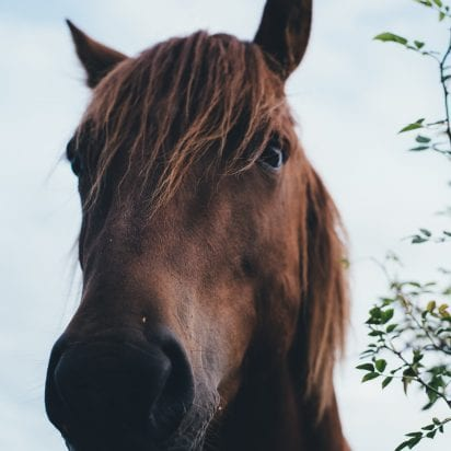 Maui Hawaii horse back ride 402