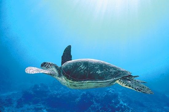 Turtle town snorkeling adventure 467