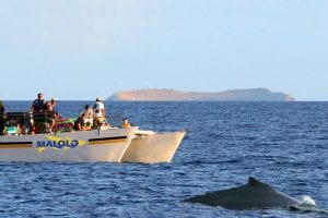 Malolo Charters whale watch 466