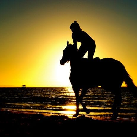 Maui horseback riding tours 474